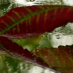 Herfstblad op spiegel met waterdruppels