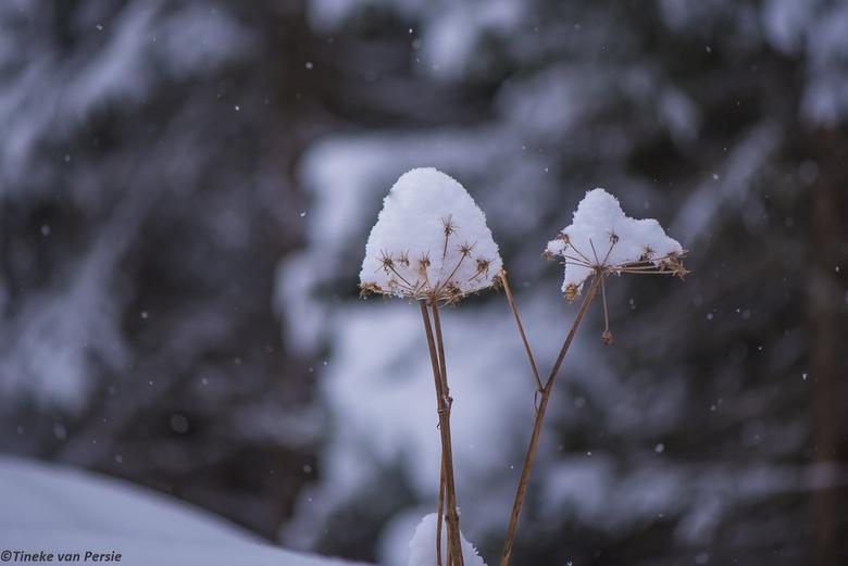 Sneeuwhoedje
