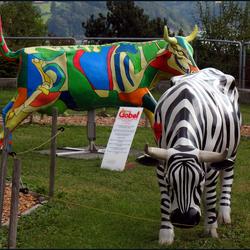 kunstige koeien