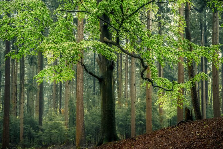 forest freshness - heerlijk om nu door de bossen te struinen, de geur op te snuiven en te genieten van de nieuwe natuur...