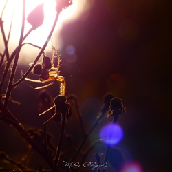 Gevangen door het licht...