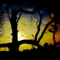 Oude boom in goud gevat