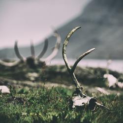 dear-graveyard