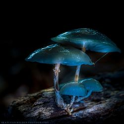 Glow in the fairytale forest...