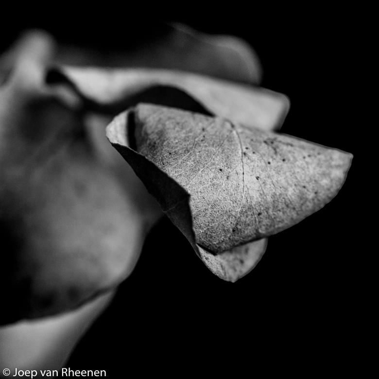 eucalyptus @ joep van rheenen -