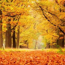 Herfst Veluwe