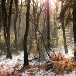 Winter wonder land - Rozendaal