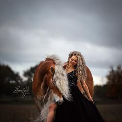 Haflinger Storm