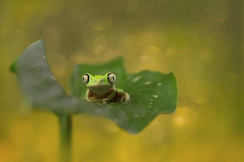 on a leaf