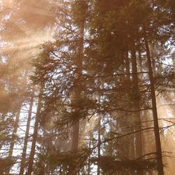 Oranje mist in de bomen bij F1 België