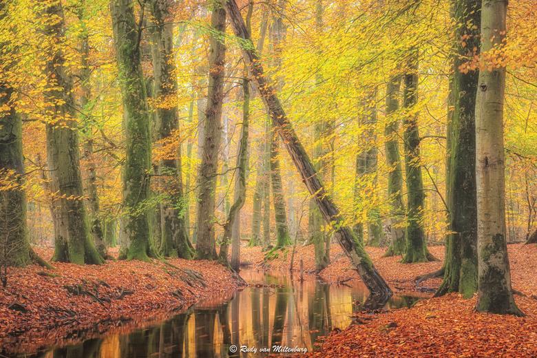 Autumn at its peak - In november bereikt de herfst zijn hoogtepunt. De laatste bladeren die nog aan de taken van de bomen vastklampen zijn goud/oranje