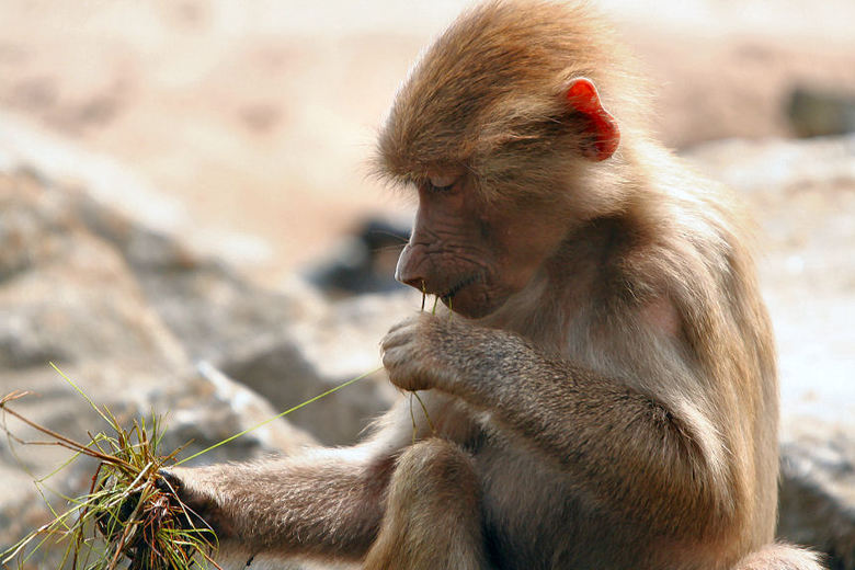 Monkey Style -