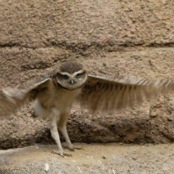 Konijnuiltje wil vliegen