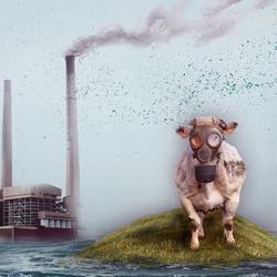 Bewerking: . . . Last Cow Standing . . .