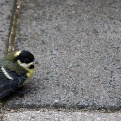 A little birdie....