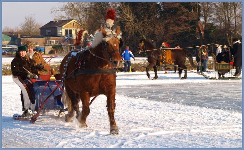 Tikkeren op de ijsbaan. - Op de ijsbaan in Strijen werden gisteren wedstrijden gereden voor de paarden met arreslee. Het is altijd een leuk spektakel