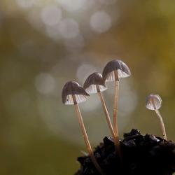 paddenstoelenzoomdag 5
