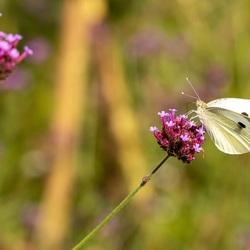 Alweeeer een vlinder ;)