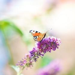Druk vliegverkeer in de tuin...