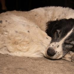 Zakk Wylde - Sleeping Dogs