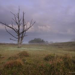 Mistige ochtend in Allardsoog