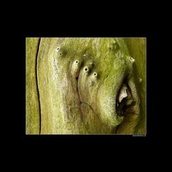 4-eyed Alien