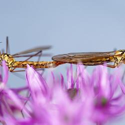 insectenliefde