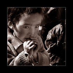 Tibetaanse snottebel