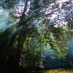 Malaysian rays of lights