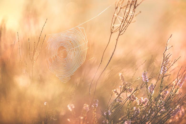 spinnenweb - Wat een heerlijke sfeer vanochtend op een heideveld. Ik ben blij dat ik toch maar eens een keer vroeg mijn bed uit ben gegaan.