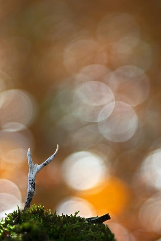 Reach for the light - Een foto van gisteren waarbij ik echt moest zoeken om nog paddenstoelen te vinden.<br /> <br /> <br /> <br /> Met vriendelij