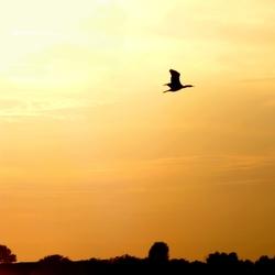Gouden vlucht