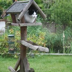 Waar blijven de vogels nu?