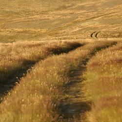 wind in het gras