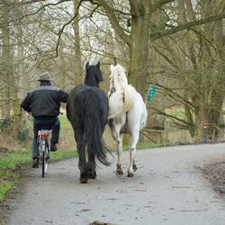 fiets op paardenkracht!