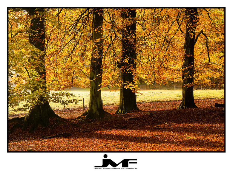 Season of colors (7) - Locatie: Posbank, NP De Veluwezoom