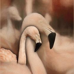 flamingoschilderij......