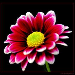 nog een bloemetje
