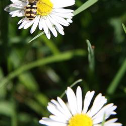 bloemen en bijtje