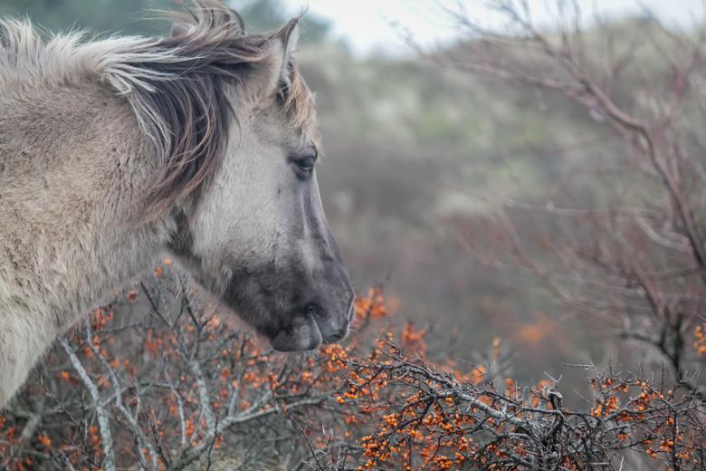 Wilde paarden -