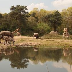 savanne weerspiegeling