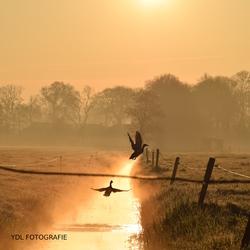 Mistige gouden zonsopkomst!