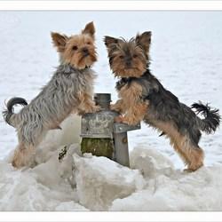winterbroers