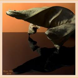 Voorhistorisch dier in bladvorm.
