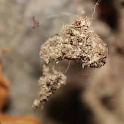 herfst in spinnenweb