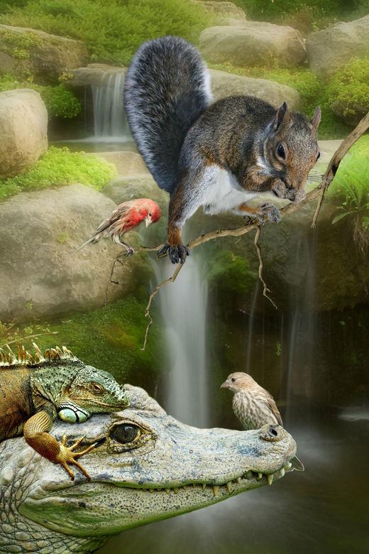 """Bewerking: Bewerkingsuitdaging week 45-46 - Tropisch Zwemparadijs voor dieren <img  src=""""/images/smileys/smile.png""""/>"""