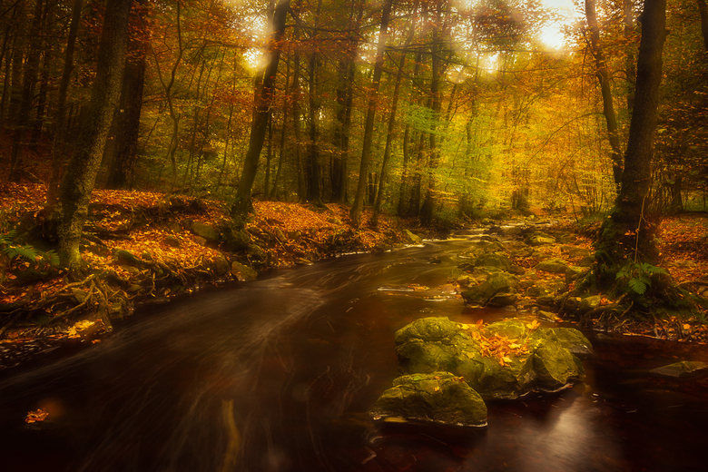 herfstkleuren bij de Hoegne - herfstkleuren bij de Hoegne