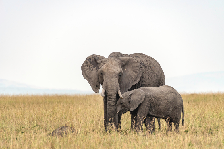 De liefde tussen moeder en kind - Ze zeggen dat een Olifant nooit vergeet, wat ze je niet vertellen is dat je een ontmoeting met een wilde olifant ook