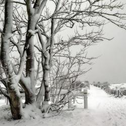 Winter in Renesse