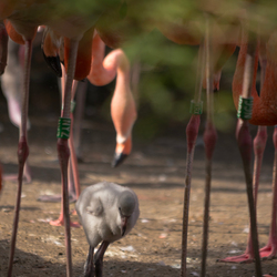 Flamingo bos.